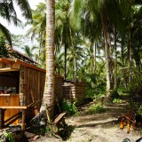 Palm Trees in Siargao Philippines