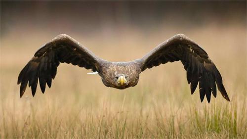 Eagleflight 5