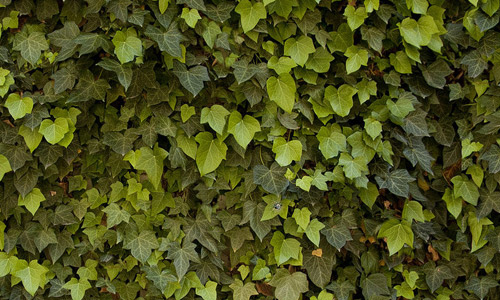 Free Seamless Leaf Textures For Your NatureInspired