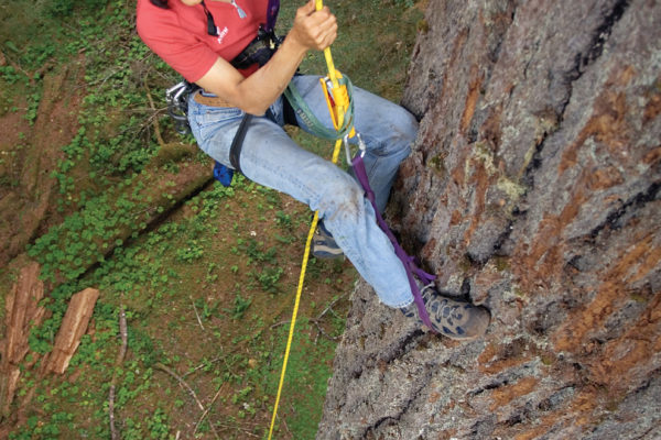 nalini climbing douglas fir in washington_Jon Huey