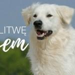 Podróż z psem na Litwę