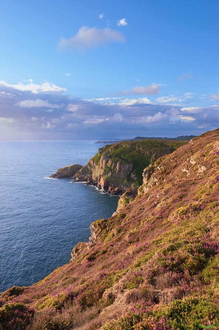 Vue sur l'anse des Sévignés, depuis la lande du Cap Fréhel, au lever du soleil
