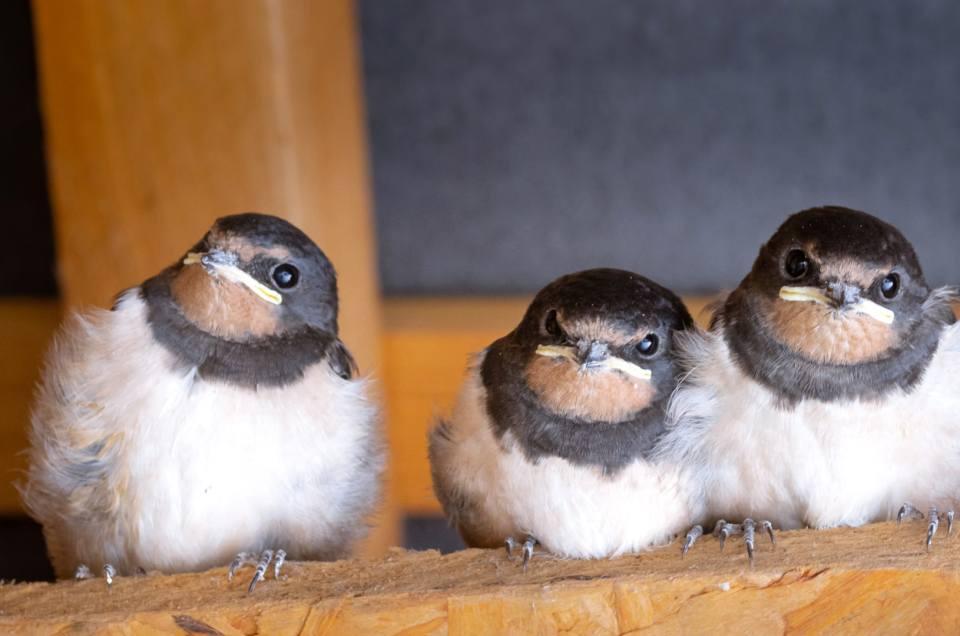 Les oiseaux du printemps 2020 dans le Bio-Jardin de Kernalo