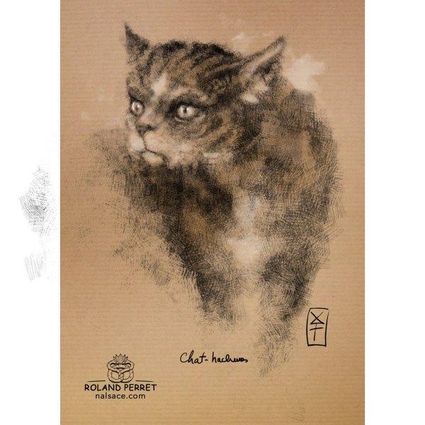 Chat hachuré