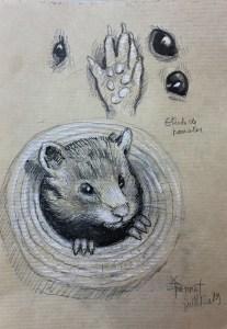Étude de hamster et patte