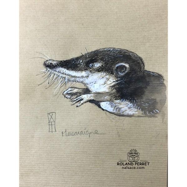 Musaraigne - dessin original sur papier kraft par Roland Perret - série des petits rongeurs