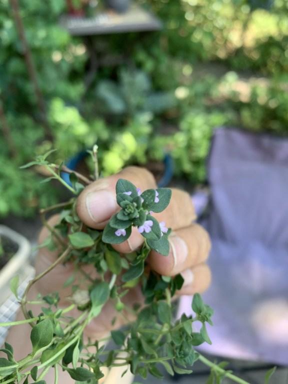 hand holding flower