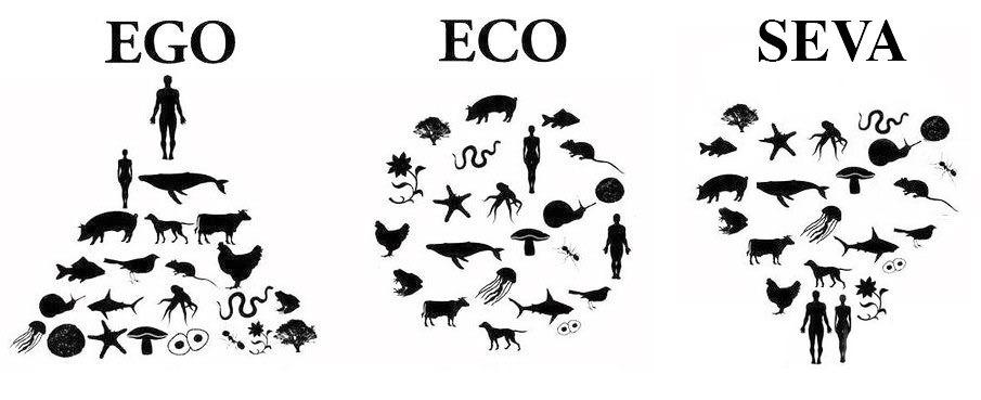 koru transformacion - La Espiral de la Conciencia Ecológica: despertando nuestro Yo Ecológico.