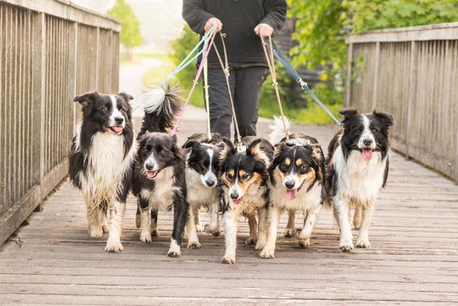 Harmony, Balance and Walking Your Dog