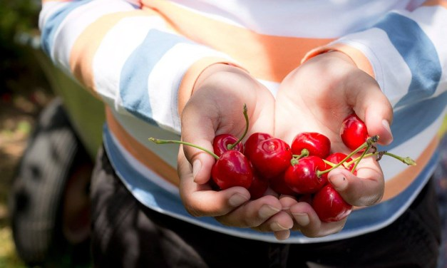 Cherry Picking in Switzerland
