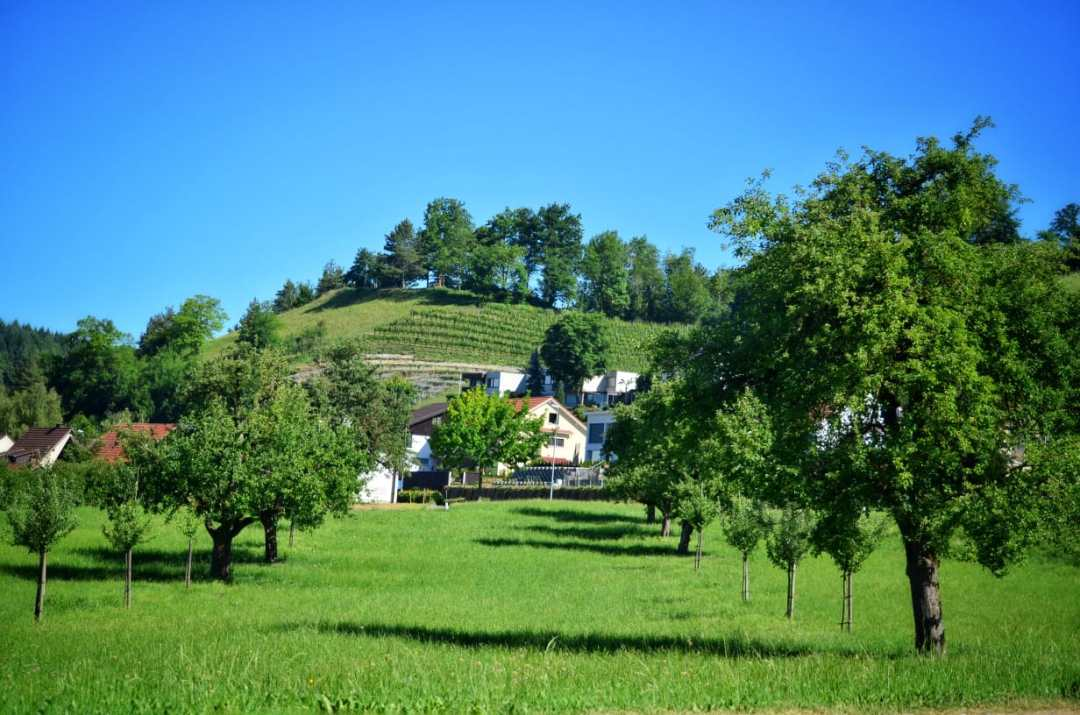 Vineyards and orchards in Tagerfelden, Aargau