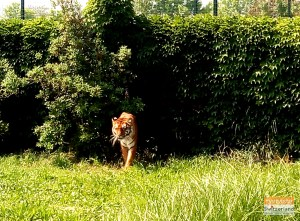 Animal Safari at Ravenna