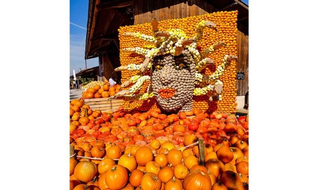 The Pumpkin Festival At Juckerhof, Seegräben