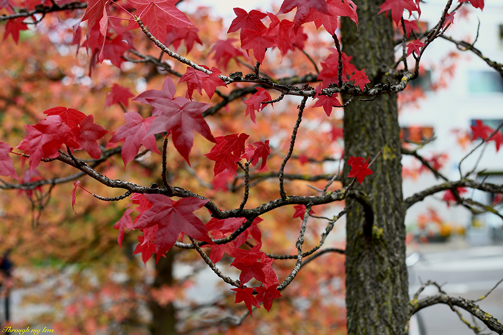 These colourful leaves are still intact