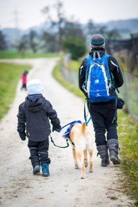 Austism and service dogs