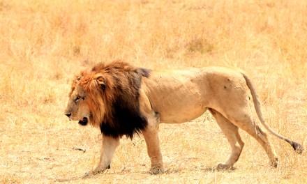Our African Safari