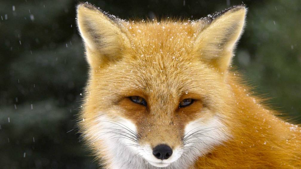 foxtales_1920