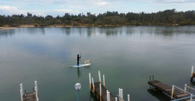 Man and his dog on a paddle board on the Nambucca River estuary