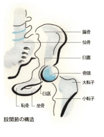 エスパー伊東の病気は右変形性股関節症 脳梗塞・心筋梗塞の原因にも
