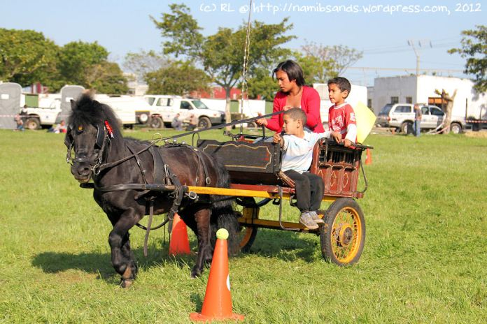 Monday, the black Shetland Pony, squeezes past the orange cones in the Children's Class