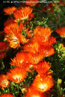 Gorgeous orange flowers