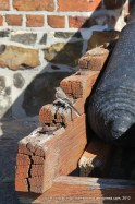 A little bird on one of the old cannons on the battlements