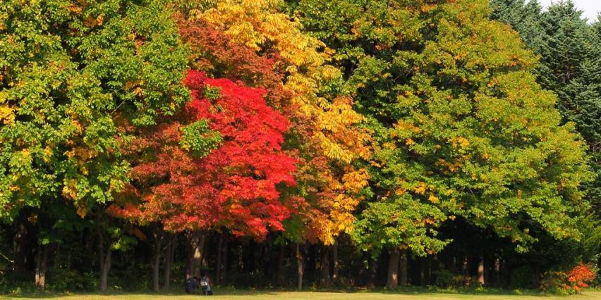 真駒内公園 この場所は毎年紅葉のグラデーションができる。