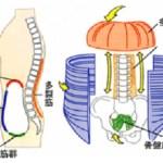 理学療法士が伝える理想的な呼吸が健康に与える11のメリット