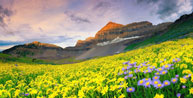 Valley-of-Flowers-Trekking