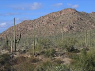 Arizona 398!