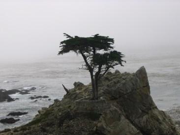 california 204