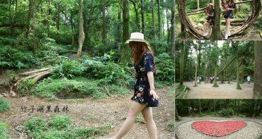 台北陽明山》竹子湖黑森林。童話森林場景.森林秘境.浪漫黑森林之心。少女最愛去打卡點