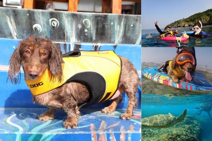 小琉球》小海龜浮潛店。帶寵物一起浮潛,與海龜共遊,欣賞美麗海底世界