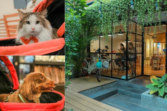 小春日和 動物雜貨 珈琲。台北民生社區,超萌貓咪店長陪你玩,寵物友善餐廳