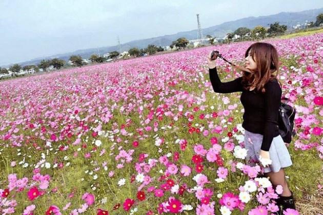 彰化員林波斯菊花海。秘境賞美景,路旁就有繽紛美麗的波斯菊、向日葵、油菜花花海。快帶你的攝影師一起來去免人擠人的免費景點拍美照吧。