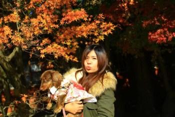 【台中和平景點】福壽山農場賞楓。台灣的賞楓松廬景點.來梨山遊玩必去的私房景點。