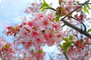 【彰化旅遊。芬園】賞櫻祕境不用人擠人❤芬園花卉休憩區