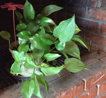 plant on fireplace.JPG