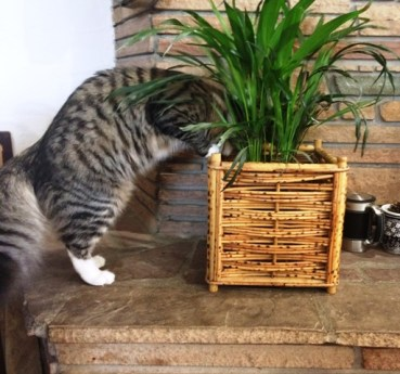 playing-with-plant-2
