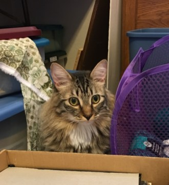 Foster looking over box