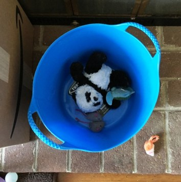 Panda in container