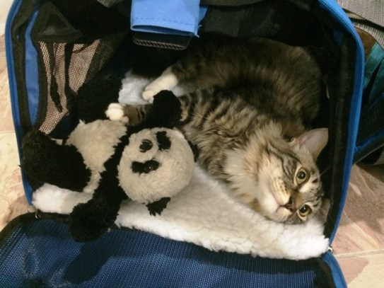 with panda in carrier