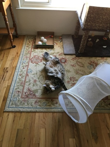 Foster on rug 947