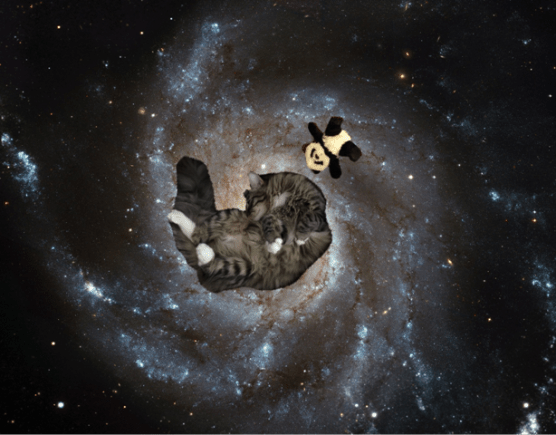 foster and panda in space2