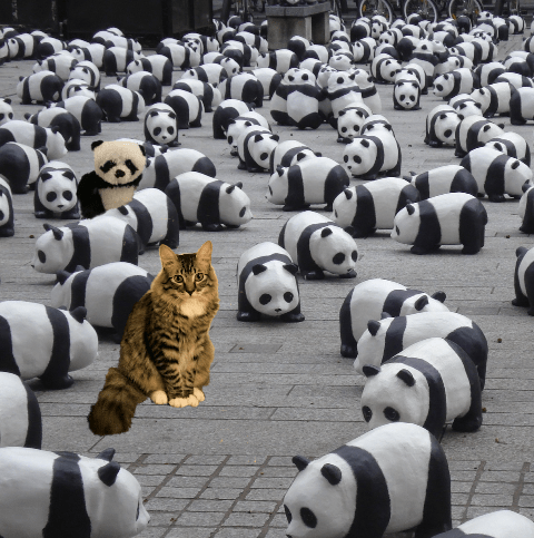 foster with pandas 2