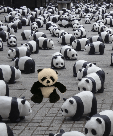 panda in display