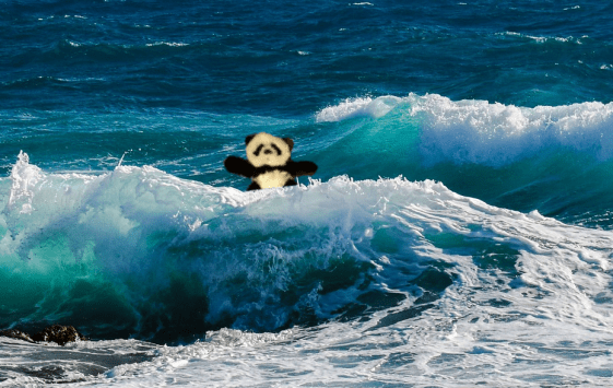 panda in waves
