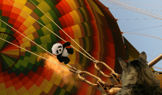 panda on wire foster2