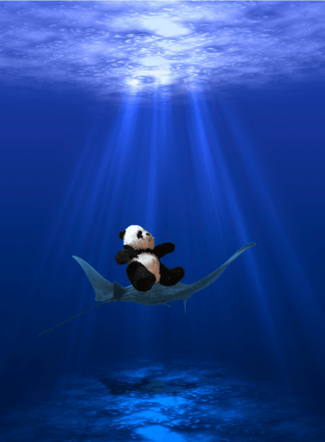 panda riding stingray