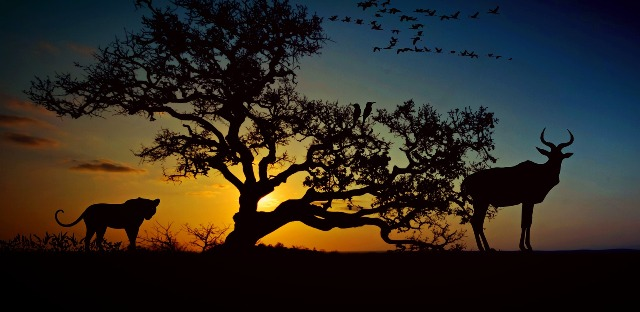 silhouette Africa